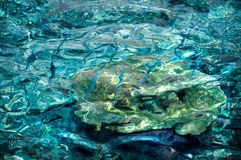 Crystal clear turquoise water with small blue fishes Stock Photo