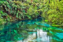 The crystal clear water of the Blue Spring, Waikato, New Zealand. The Blue Spring at Te Waihou, NZ, some of the purest and clearest water in the country. The royalty free stock photo