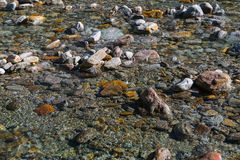 Crystal clear water and colorful stones of wild river verzasca i Stock Images