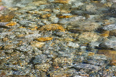 Crystal clear water and colorful stones of wild river verzasca Royalty Free Stock Photo