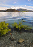 Crystal Clear Water, Lake Wanaka New Zealand. The crystal clear waters of lake Wanaka, New Zealand. In the foreground are willow trees growing under water. In Stock Images