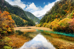 Crystal clear water of river among fall woods in mountain gorge Stock Photography