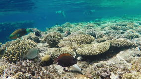 Crystal clear water with tropical fish and corals. Bathing tourists can be seen in the distance - a great vacation stock footage