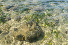 Crystal clear water of the tropical sea,Phuket Stock Photography