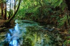 Crystal Clear Waters von Hamurana-Frühlingen, NZ lizenzfreie stockfotografie