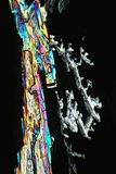 Polarized Light makes Colors gleam. A crystal of coppersulphate mixed with crystals of citric acid seen through the microscope 100fold, in polarized light stock images
