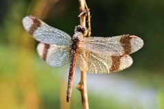 Crystal dragonfly stock images