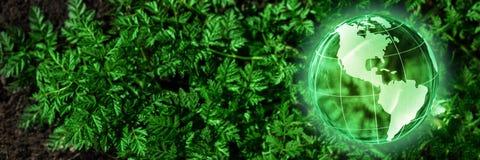 Crystal Earth On Fern imagen de archivo libre de regalías
