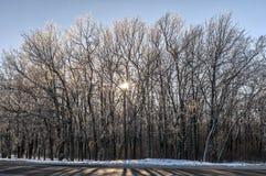 Crystal Forest Fotografia Stock