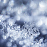 Crystal Forest. Digital composite of snowflakes and winter frost Stock Photo