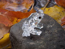 Crystal frog in autumn Stock Images