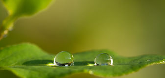 Crystal-like water drops on leaf. Two crystal-ball-like water drops sit on a green leaf Stock Image