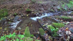 Crystal mountain stream. Carpathian mountains. Ukraine. Clear water flows in a mountain stream in the fall. Carpathian mountains stock footage