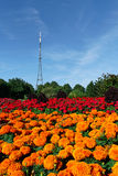 Crystal Palace Transmitting Station (Mast). Crystal Palace Mast behind colourful flowerbeds. The mast used to be London's tallest structure - before the building stock photo