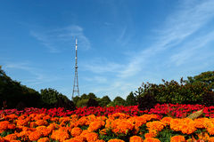 Crystal Palace Transmitting Station (Mast). Crystal Palace Mast behind colourful flowerbeds. The mast used to be London's tallest structure - before the building Stock Image