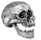 Crystal Polygonal Skull abstrait Images stock