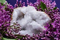 Crystal Quartz Geode claro com o centro druzy cristalino cercado pela flor lilás roxa foto de stock