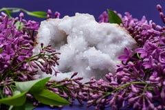 Crystal Quartz Geode claro com o centro druzy cristalino cercado pela flor lil?s roxa fotos de stock