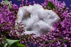 Crystal Quartz Geode claro com o centro druzy cristalino cercado pela flor lil?s roxa foto de stock royalty free