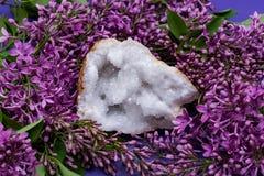Crystal Quartz Geode claro com o centro druzy cristalino cercado pela flor lil?s roxa imagens de stock