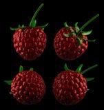 Crystal raspberry Stock Photo
