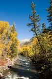 Crystal River. Golden autumn trees along the Crystal River near Redstone, Colorado Stock Image
