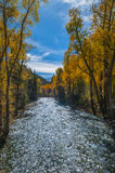 Crystal River Colorado Fall Colors Stock Afbeelding