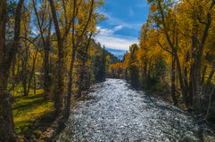 Crystal River Colorado Fall Colors Royalty Free Stock Photo