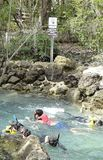 Snorkeling in Clear Florida River Spring Stock Images