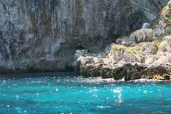 Crystal sea in Capri Royalty Free Stock Image