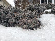 Crystal Snow arkivbilder