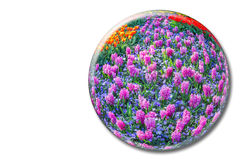 Crystal sphere with pink hyacinths on white background Royalty Free Stock Photos