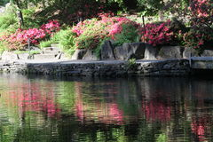 Crystal Springs Rhododendron Garden Immagine Stock Libera da Diritti