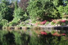 Crystal Springs Rhododendron Garden Fotografie Stock Libere da Diritti