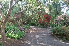 Crystal Springs Rhododendron Garden Fotografia Stock
