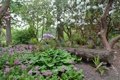 Crystal Springs Rhododendron Garden i Portland, ELLER Royaltyfri Foto