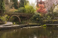 Crystal Springs Rhododendron Gardens photo stock