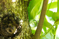 Crystal stone in green outdoor. Royalty Free Stock Photography