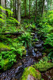 A Crystal Stream Flowing Through a Beautiful Primeval Rain Forest Royalty Free Stock Image