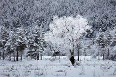 Crystal träd Royaltyfri Bild