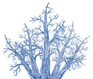 Crystal Tree Bunch Fotografia de Stock