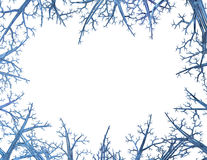 Crystal Tree Frame Stock Photography