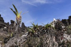Crystal Valley montering Roraima arkivbilder