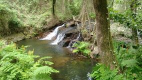 Crystal vatten i skog fotografering för bildbyråer