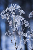 Crystalized высушил листву int он зима в древесинах Стоковые Фото