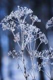 Crystalized ha asciugato il fogliame int lui l'inverno nel legno Fotografie Stock
