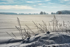 Crystalized Snow and Wild Grasses Stock Images