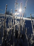 Crystalizedinstallaties in de winter Royalty-vrije Stock Foto's