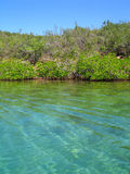 Crystalline waters and vegetation Venezuela Stock Photo