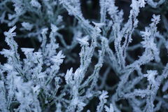Crystallized plants royalty free stock images